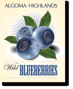 Miramar launches a new website for Algoma Highlands Blueberries